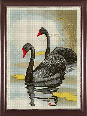 Черные лебеди, оригинал