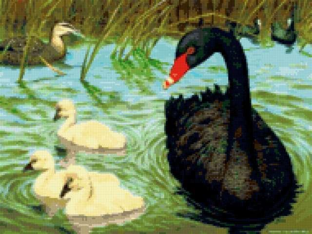 Черный лебедь, предпросмотр