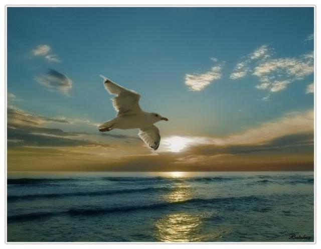Морской пейзаж, пейзаж, птицы,