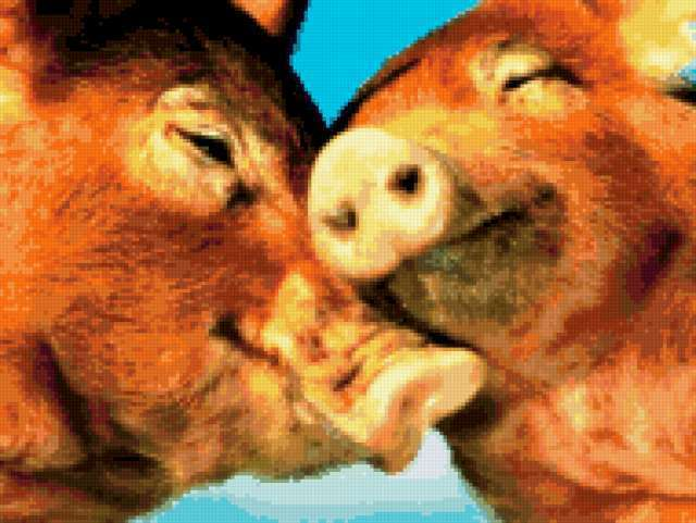Свинки, предпросмотр