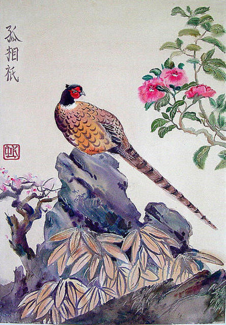 Фазан, птицы, фазаны