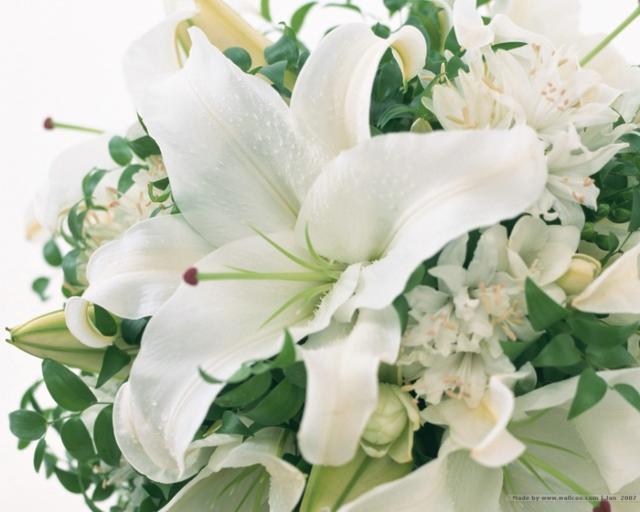 Белые лилии, оригинал