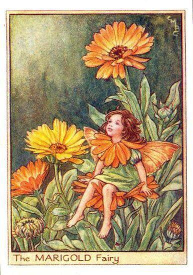 Фея календулы, цветы