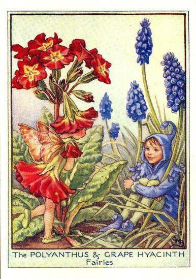 Фея первоцвета, сказка, цветы,