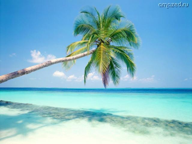 Пляж с пальмой,