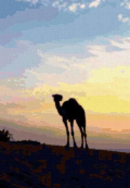 Верблюд на закате
