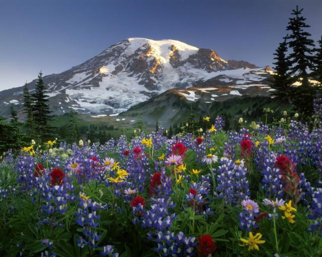 Весна в горах, горы, цветы,
