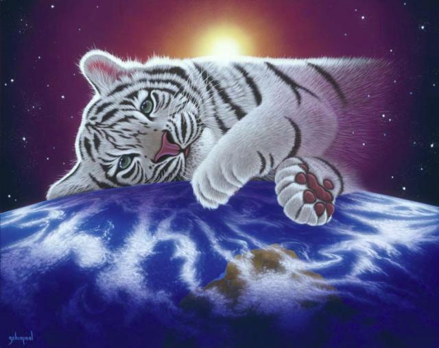 Белый тигрёнок, тигр, тигры,