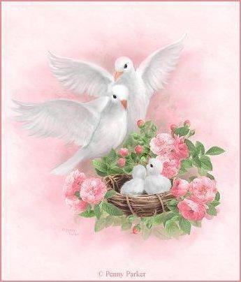 Семья голубей, голуби