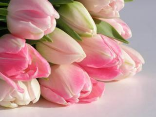 Spring tulips,
