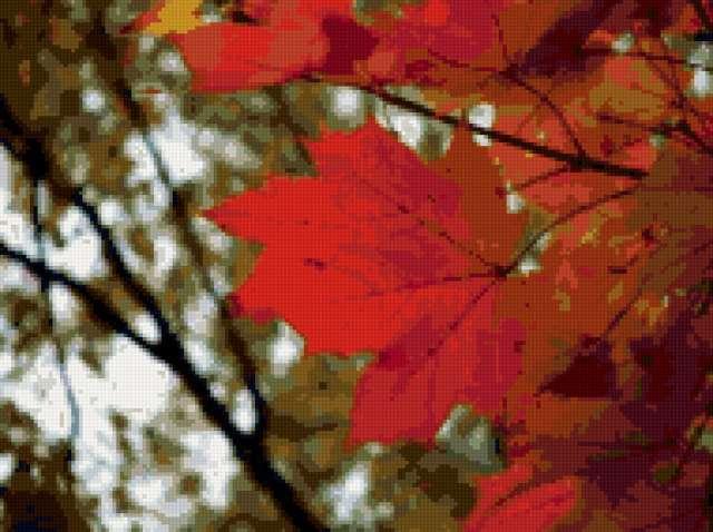 Кленовые листья, предпросмотр
