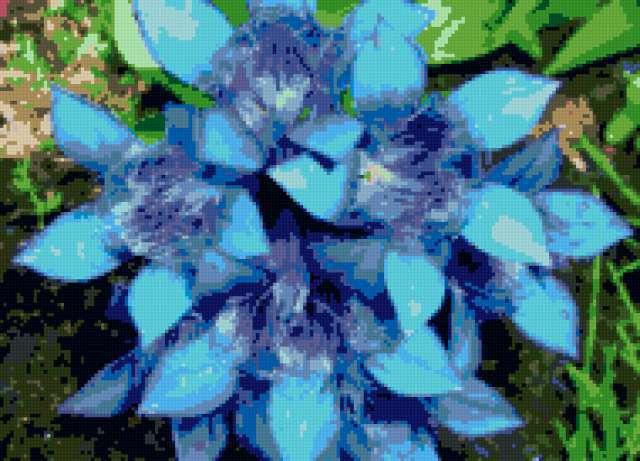 Синие цветы, предпросмотр