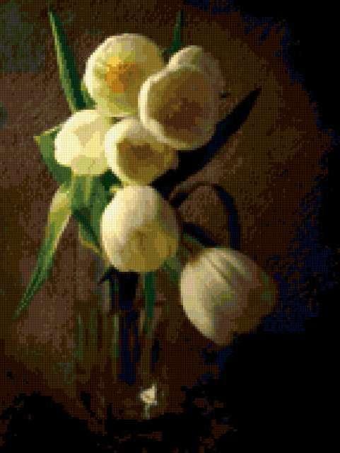 Белые тюльпаны, предпросмотр