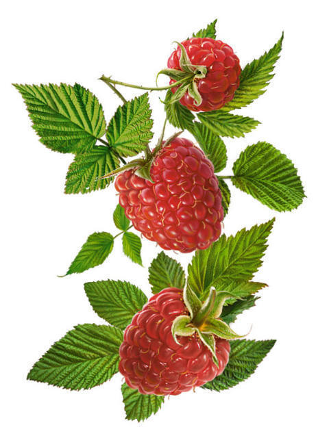 Малина, ягоды, фрукты, малина