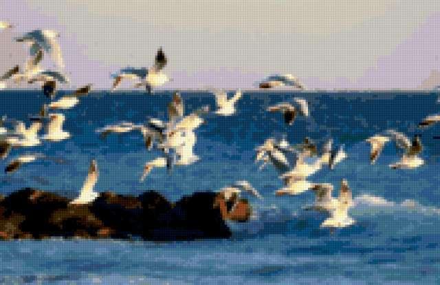 Чайки, чайка, чайки, птица,