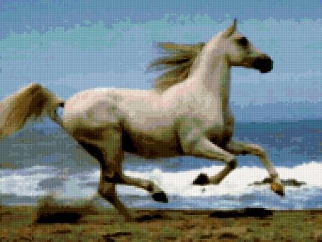 Белая лошадь на море,
