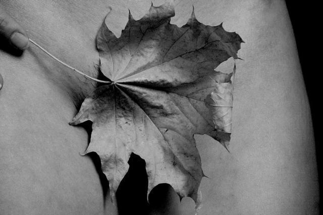 Кленовый лист, черно-белое
