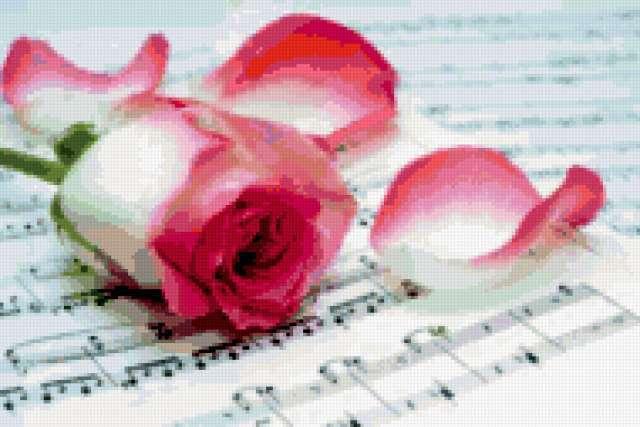 Роза и ноты, предпросмотр