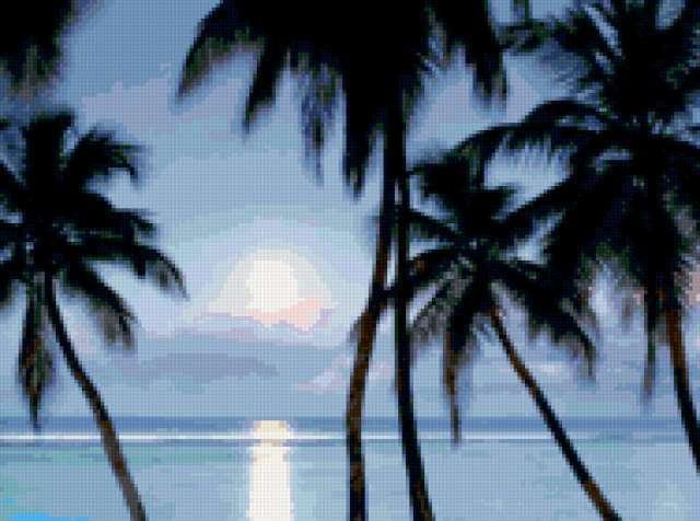 Пальмы и лунная дорожка,