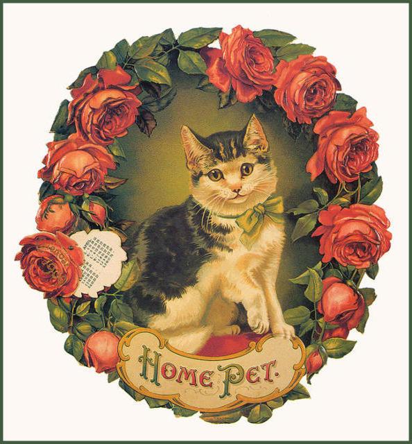 Кот в венке, кошки, венки,