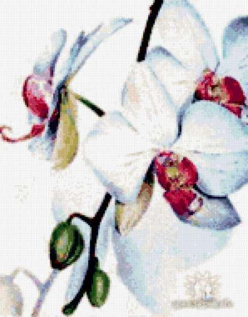 Дикая орхидея, цветы, букет,