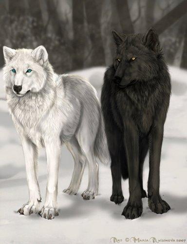 Волки, волки, пара, черно-