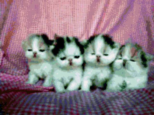 Квартет, кошки, котята