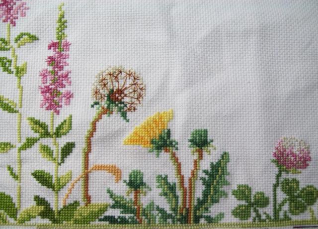 Полевые цветы, люпин, люпины,