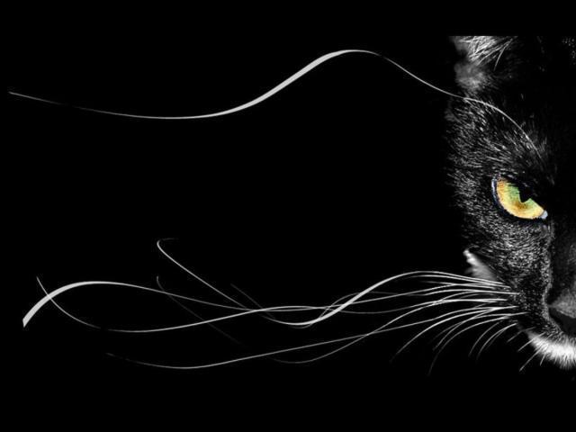 Черный кот, кошки, черно-белое