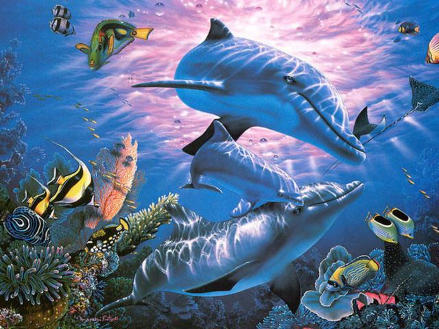 Подводный мир, океан, море.