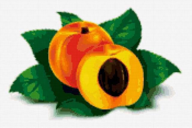 Схема вышивки абрикоса