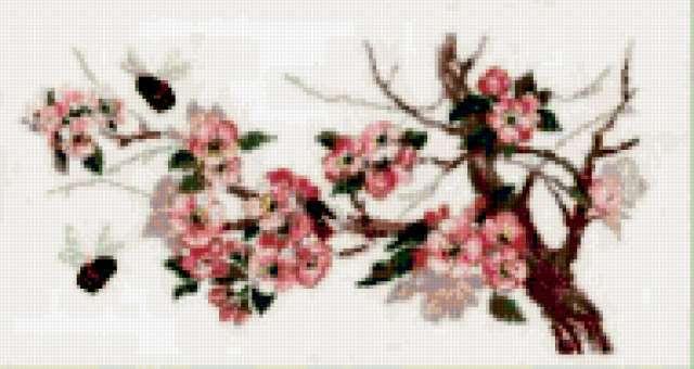 Яблоня в цвету, ветка, природа