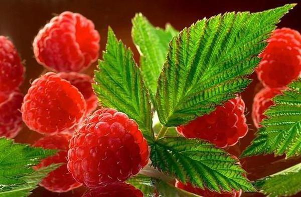 Ягода-малина, ягоды