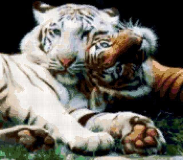 Тигры, кошки, животные, тигр,