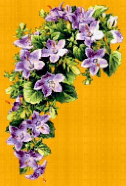 Клематис, цветы, букет