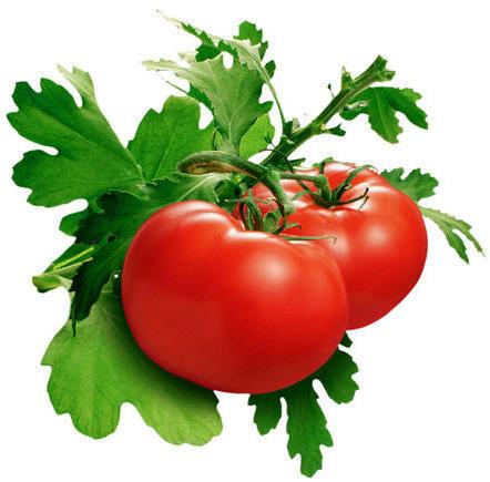 помидорки фото
