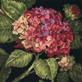 Гортензия, цветы, гортензия