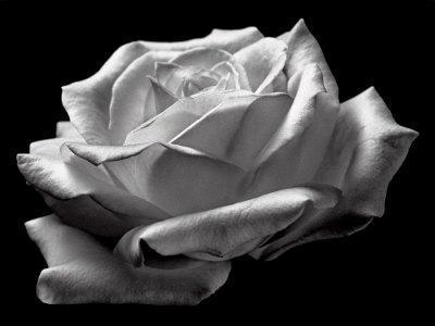 Схема вышивки «Черно-белая