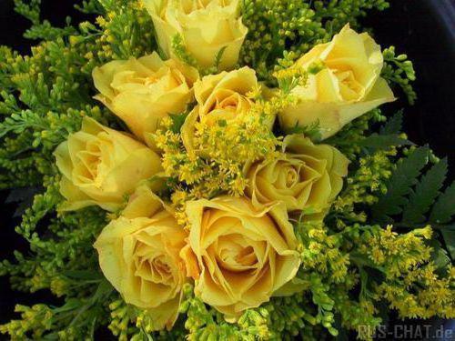 Желтые розы, цветы, розы,