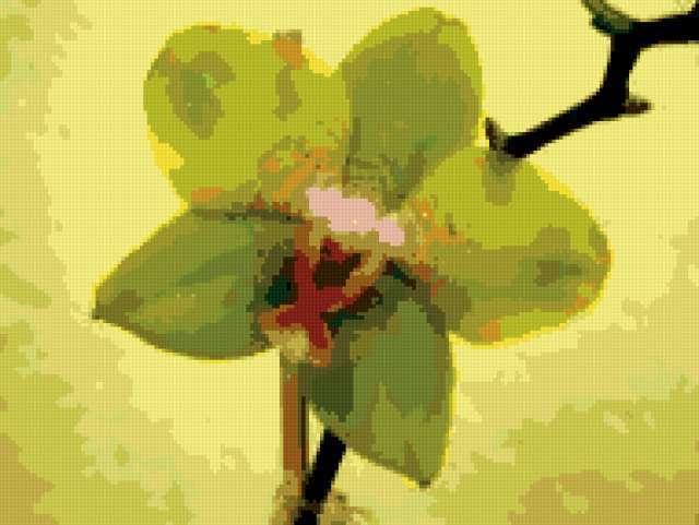 Фаленопсис, предпросмотр