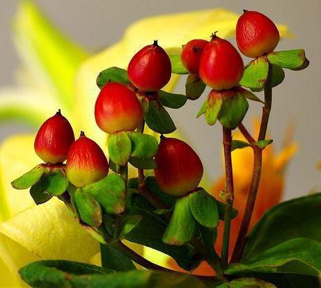 цветы фото экзотика