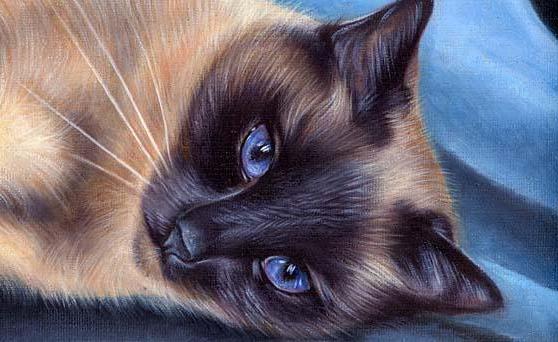 Katja Turnsek_ тайский кот,