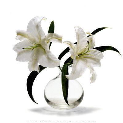Белые лилии на белом, лилии,