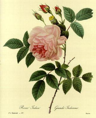 Роза на желтом фоне, оригинал