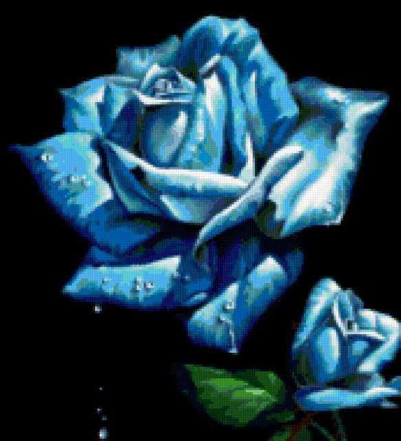 Голубая роза, предпросмотр