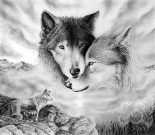 Волки, животные, волки