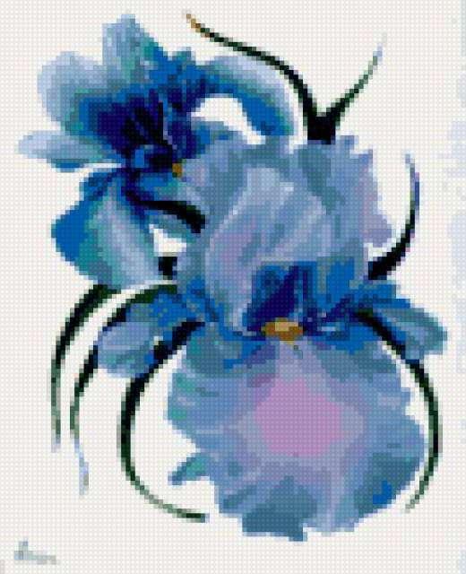 Ирис, голубая фантазия
