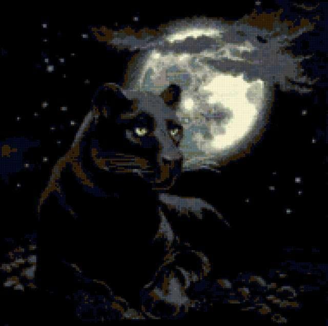 Черная ночь, черная пантера,