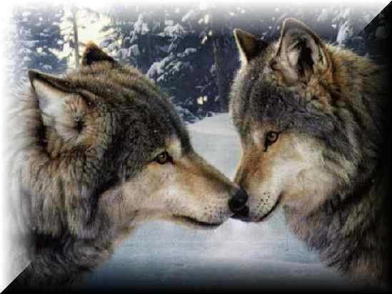 Нежность, волки
