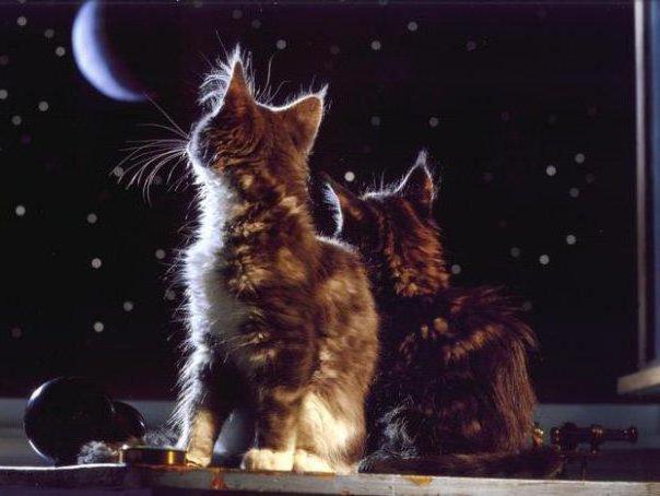 луна, звезды, тишина